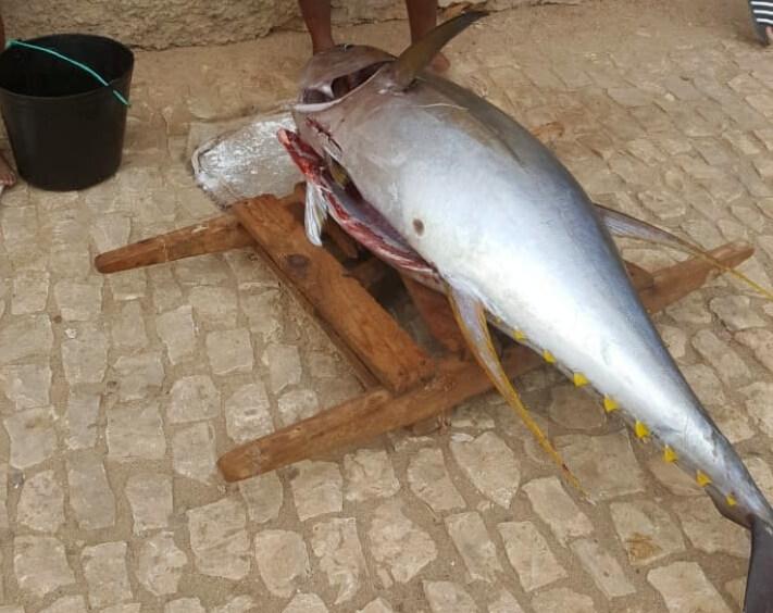 Yellow Fin Tuna caught on Maio