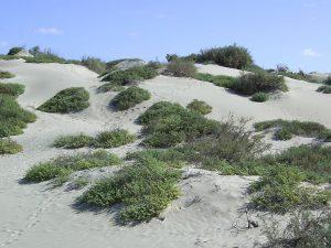 maio-beach-dunes-01