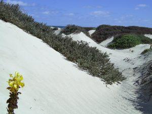 maio-beach-dunes-02