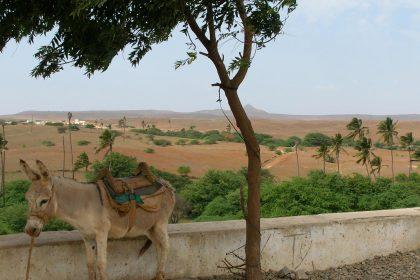donkey-transport-in-maio