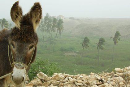 maio-donkey-in-green-lands-bg