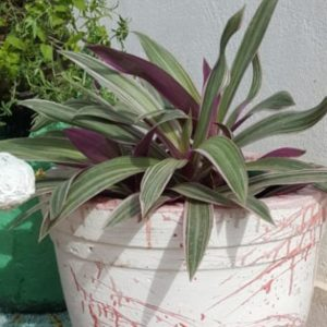 handmade concrete round red white garden planter with plant