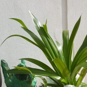 handmade concrete square garden planter with plant