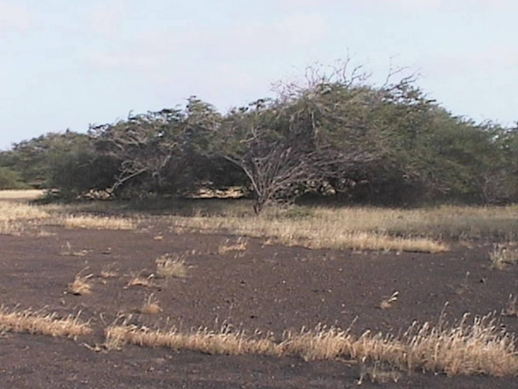 funchago large plot of land for sale maio cape verde 01