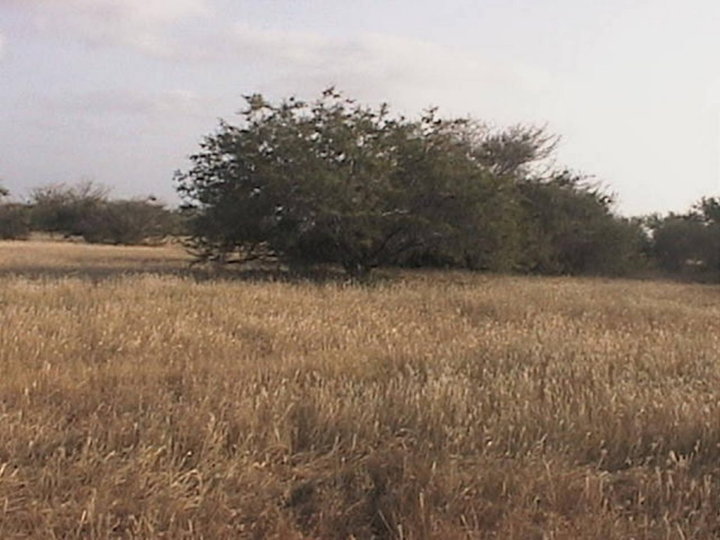 funchago large plot of land for sale maio cape verde 04