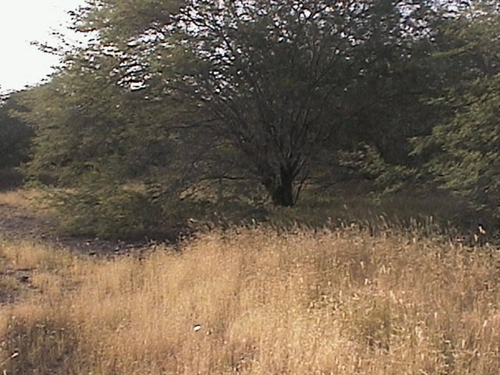 funchago large plot of land for sale maio cape verde 05
