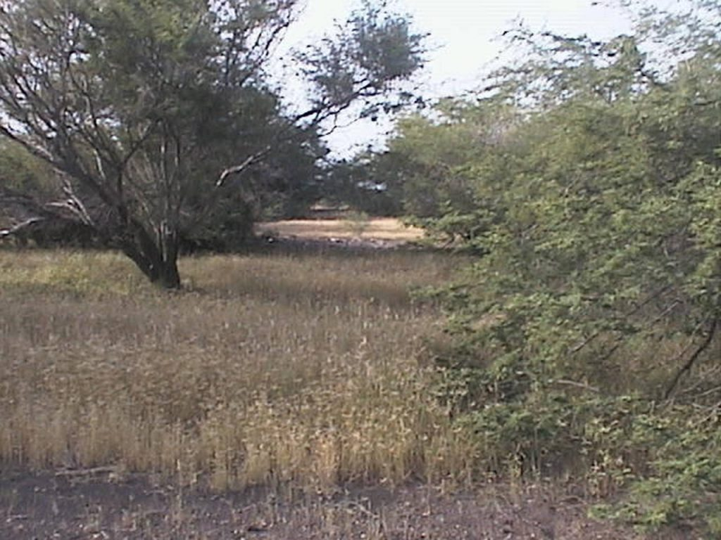 funchago large plot of land for sale maio cape verde 06