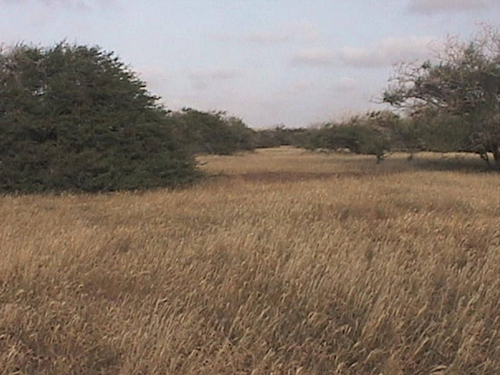funchago large plot of land for sale maio cape verde 08