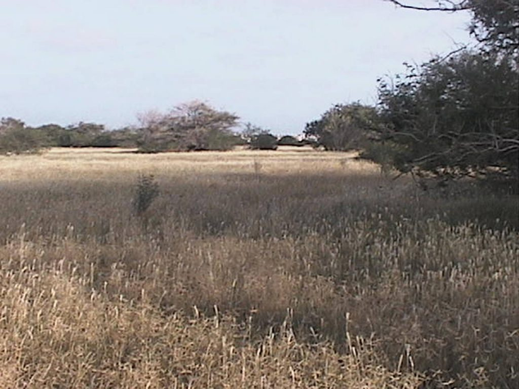 funchago large plot of land for sale maio cape verde 09