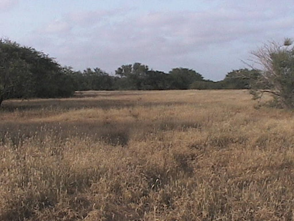 funchago large plot of land for sale maio cape verde 10