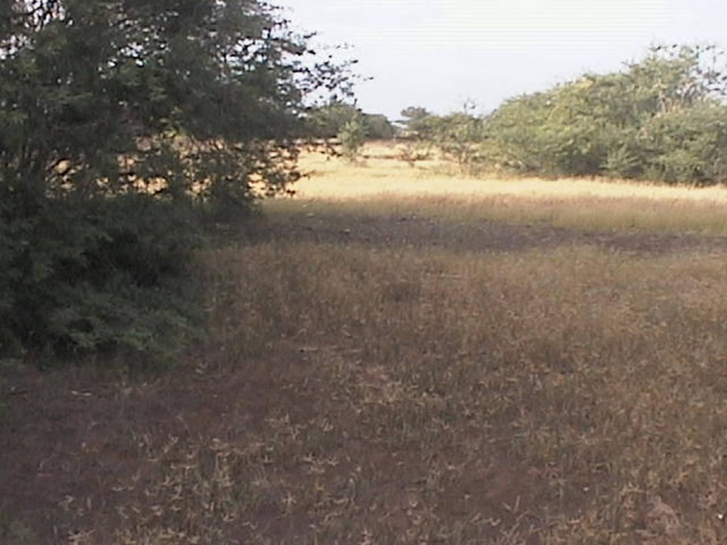 funchago large plot of land for sale maio cape verde 13
