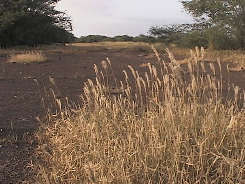 funchago large plot of land for sale maio cape verde 15