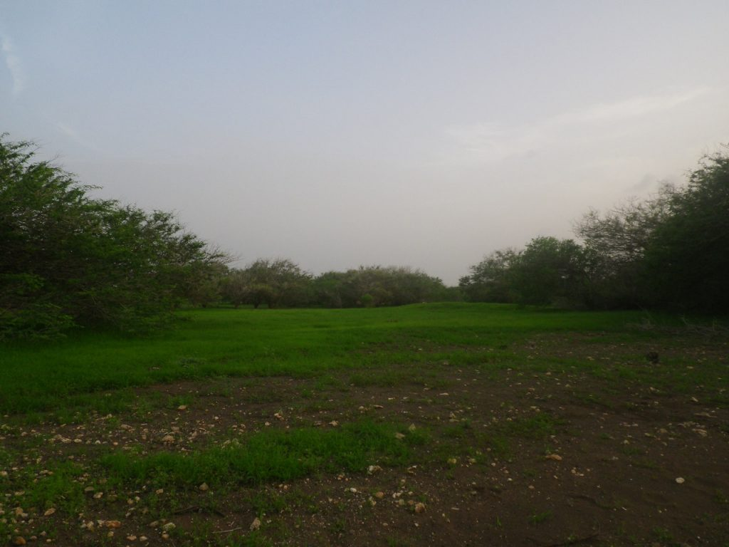 funchago large plot of land for sale maio cape verde 23