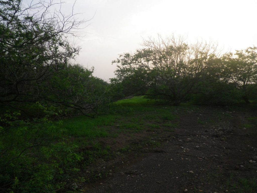 funchago large plot of land for sale maio cape verde 25