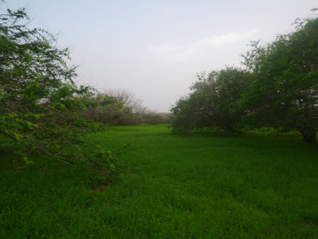 funchago large plot of land for sale maio cape verde 27