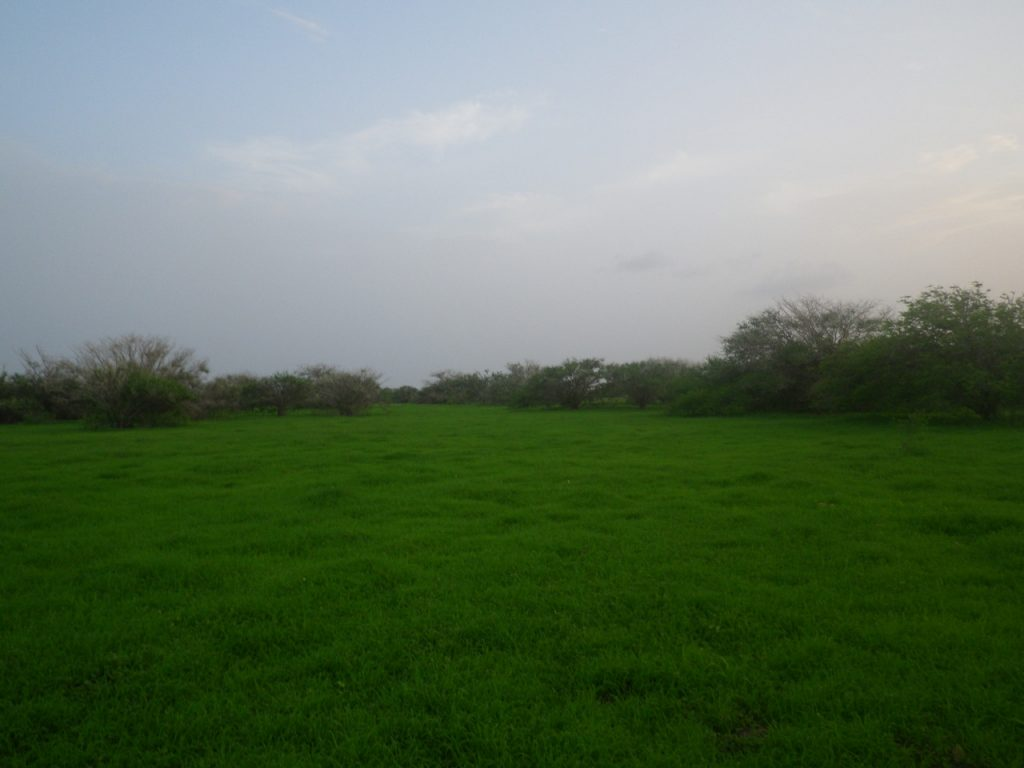 funchago large plot of land for sale maio cape verde 28